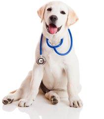 medical pup